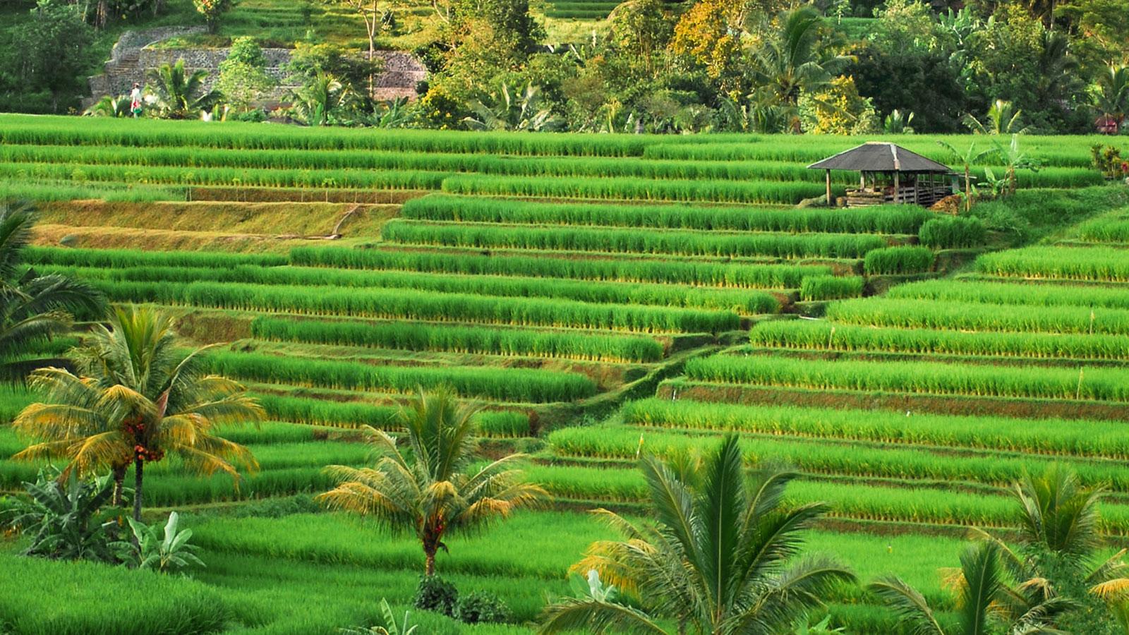 Bali Bagus Tours - Jatiluwih